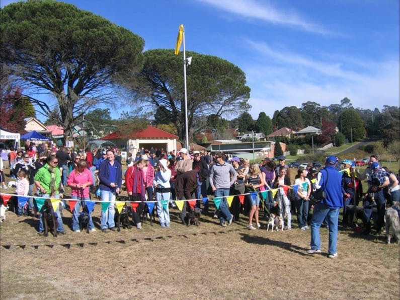 Image of the event 'Million Paws Walk - Blue Mountains'
