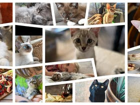Beautiful Cats, Relaxing Atmosphere, Great Food.