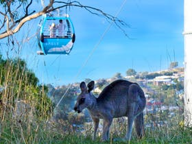 Local wildlife spotted at Arthurs Seat Eagle