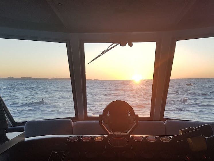 Looking out from the Bridge of the vessel 'The Princess' with dolphins in the backgrounds. Sunset