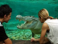 goliath the 4.5m estaurine crocodile at Cairns ZOOM & Wildlife Dome