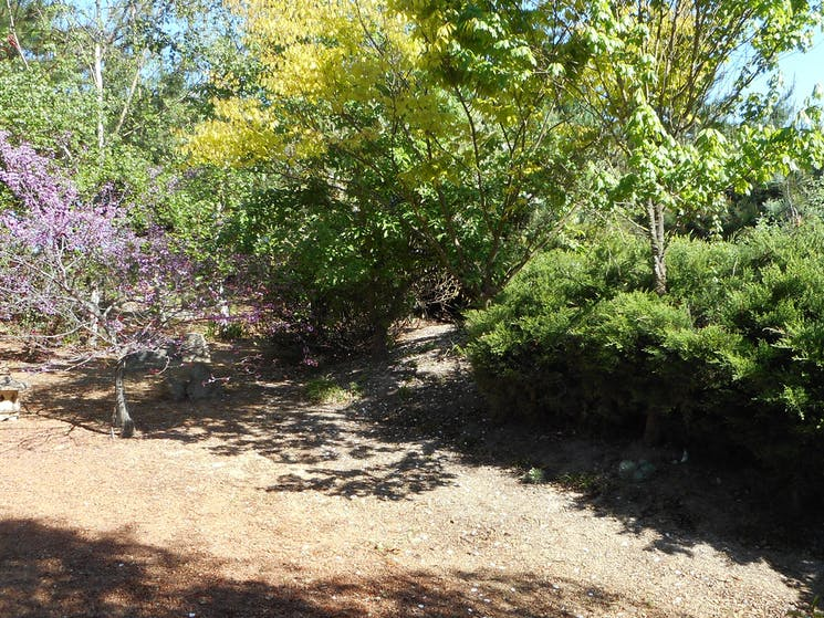 Part of the Japanese Garden at Crystal Brook