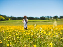 A girl in the middle of a field of yellow flowers in a vineyard