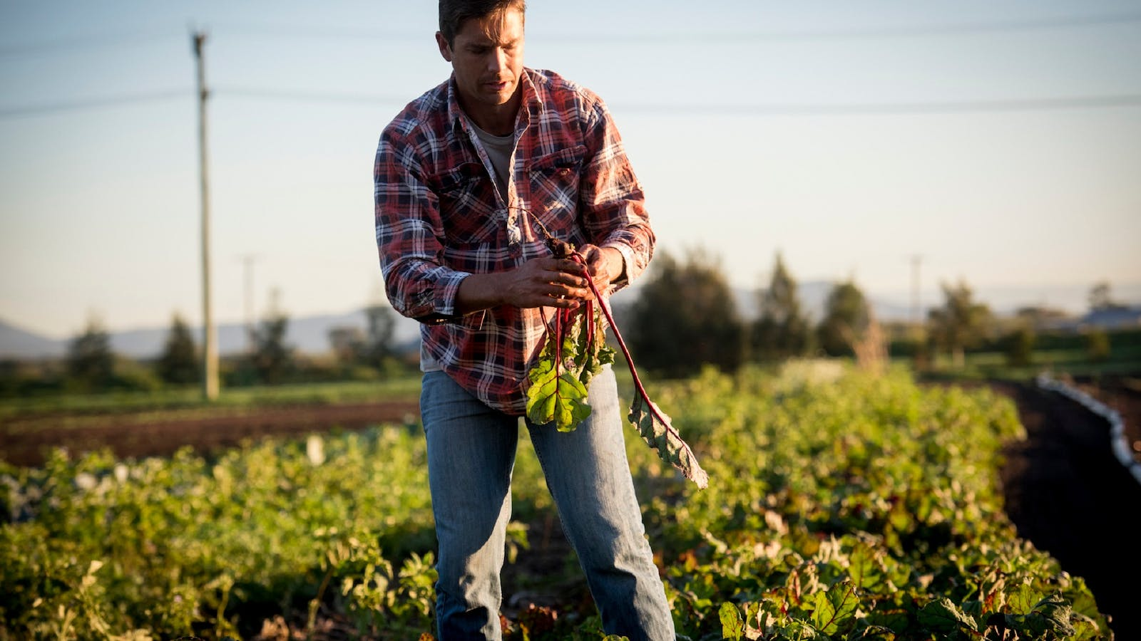 Farmer Jesse picking crops for the Slow Food Earth Market Maitland
