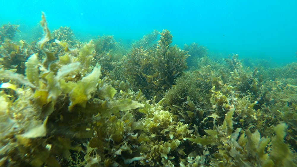 Recovery of the Great Barrier Reef expedition