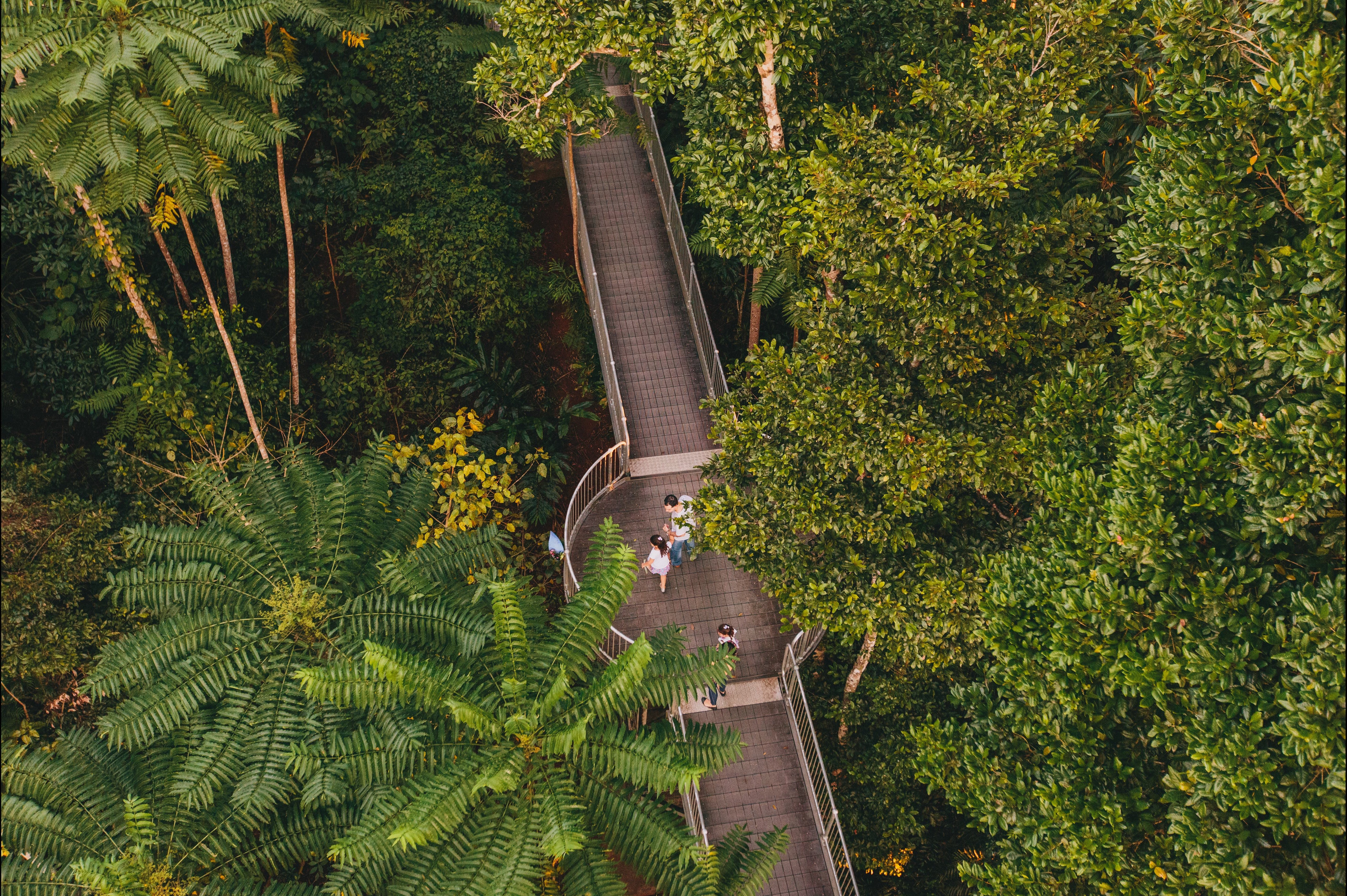 Consumer · Attraction; Mamu Tropical Skywalk & Mamu Tropical Skywalk - Attraction - Queensland
