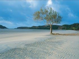 Cape York Beach, Far North Queensland
