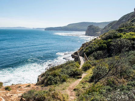 Mount Bouddi Walking Track