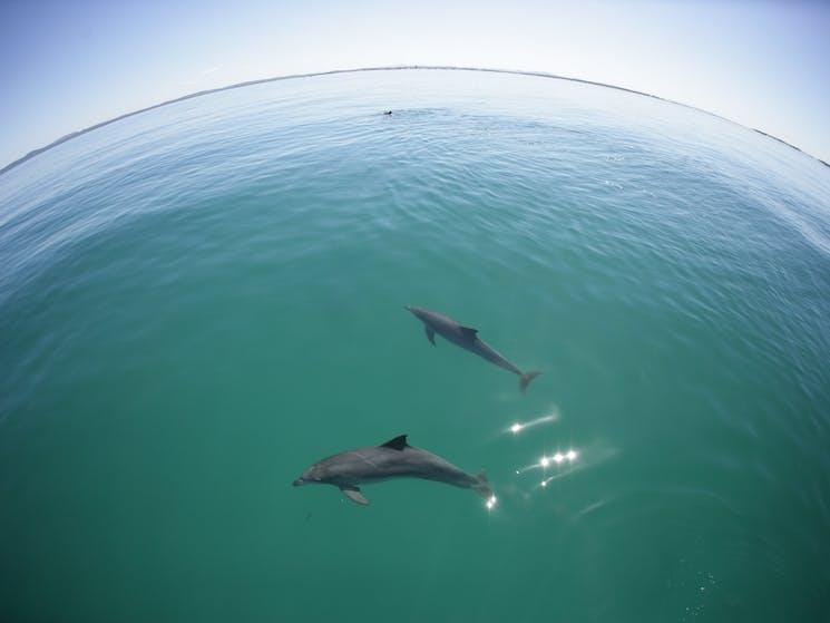 Dolphin tour Port Stephens