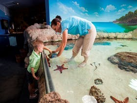 Discovery Lagoon at Reef HQ Aquarium