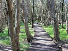 Kooloonbung Creek Nature Reserve and Historic Cemetery