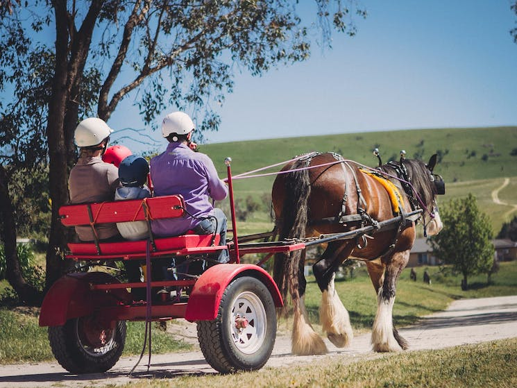 Sulky rides behind a Clydesdale Horse