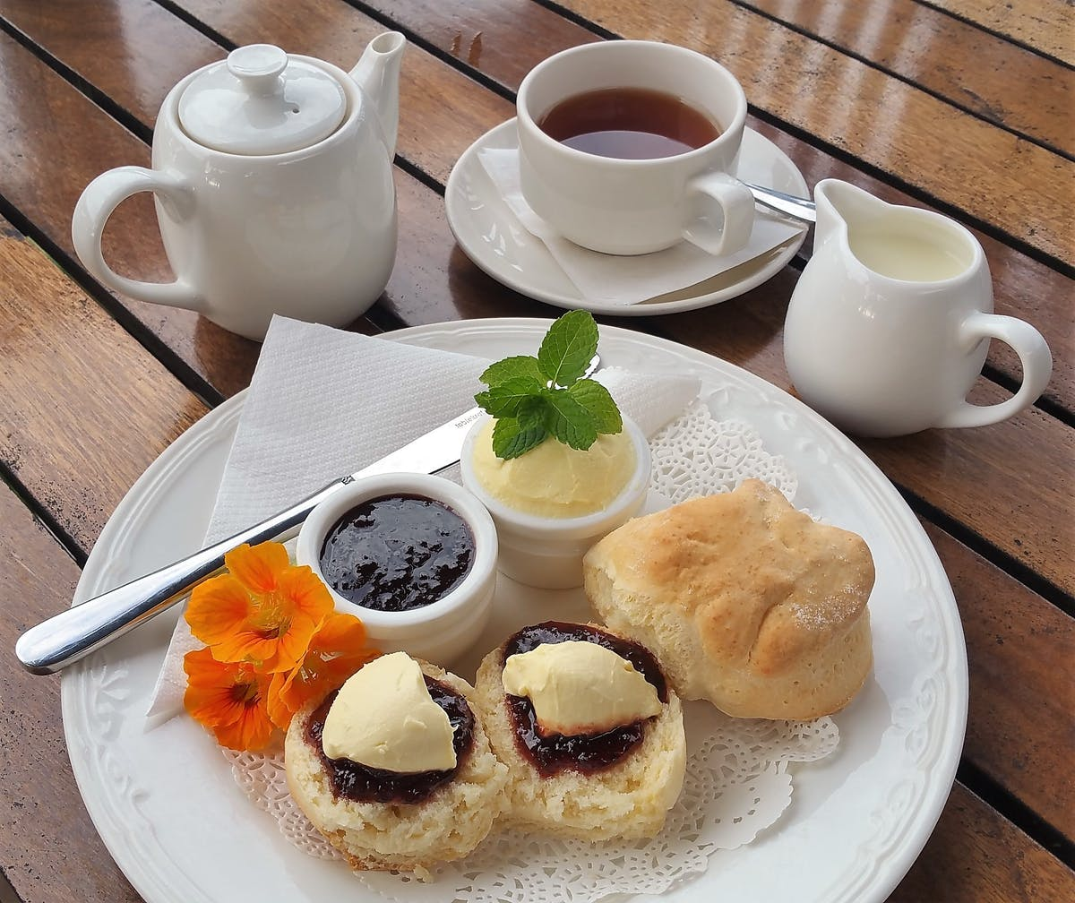 Our Famous Scones with Fresh Jersey Cream & Davidsons' Plum Rainforest Jam