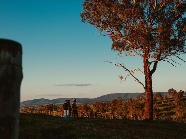 Beautiful landscape image of local winery