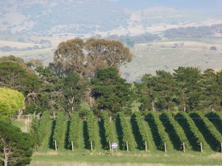 Pankhurst Wines during Canberra Wine Week
