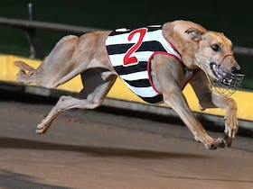 Warrnambool Greyhound Cup