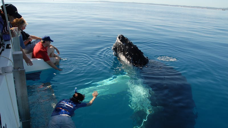 Blue Dolphin Exclusive Whale Encounter