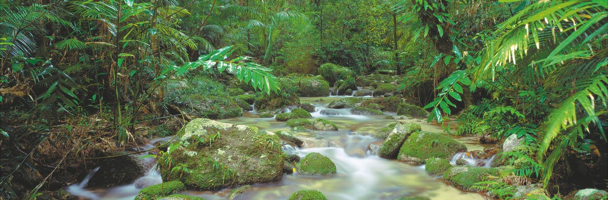 Mossman River cascades over mosssy rocks in Daintree National Park