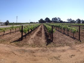 Sunday Morning Vineyard Walk