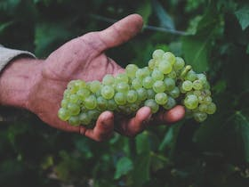 The Tasting Table: A Celebration of Chardonnay