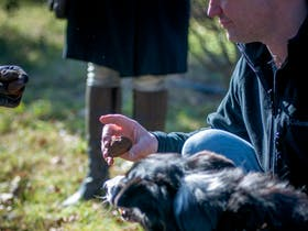 A farmer holds a truffle up to his dog's nose