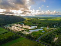 Aerial view over the Daintree Saltwater Barramundi Farm at Wonga Beach