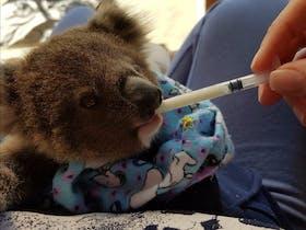 Koala Hospital Port Macquarie