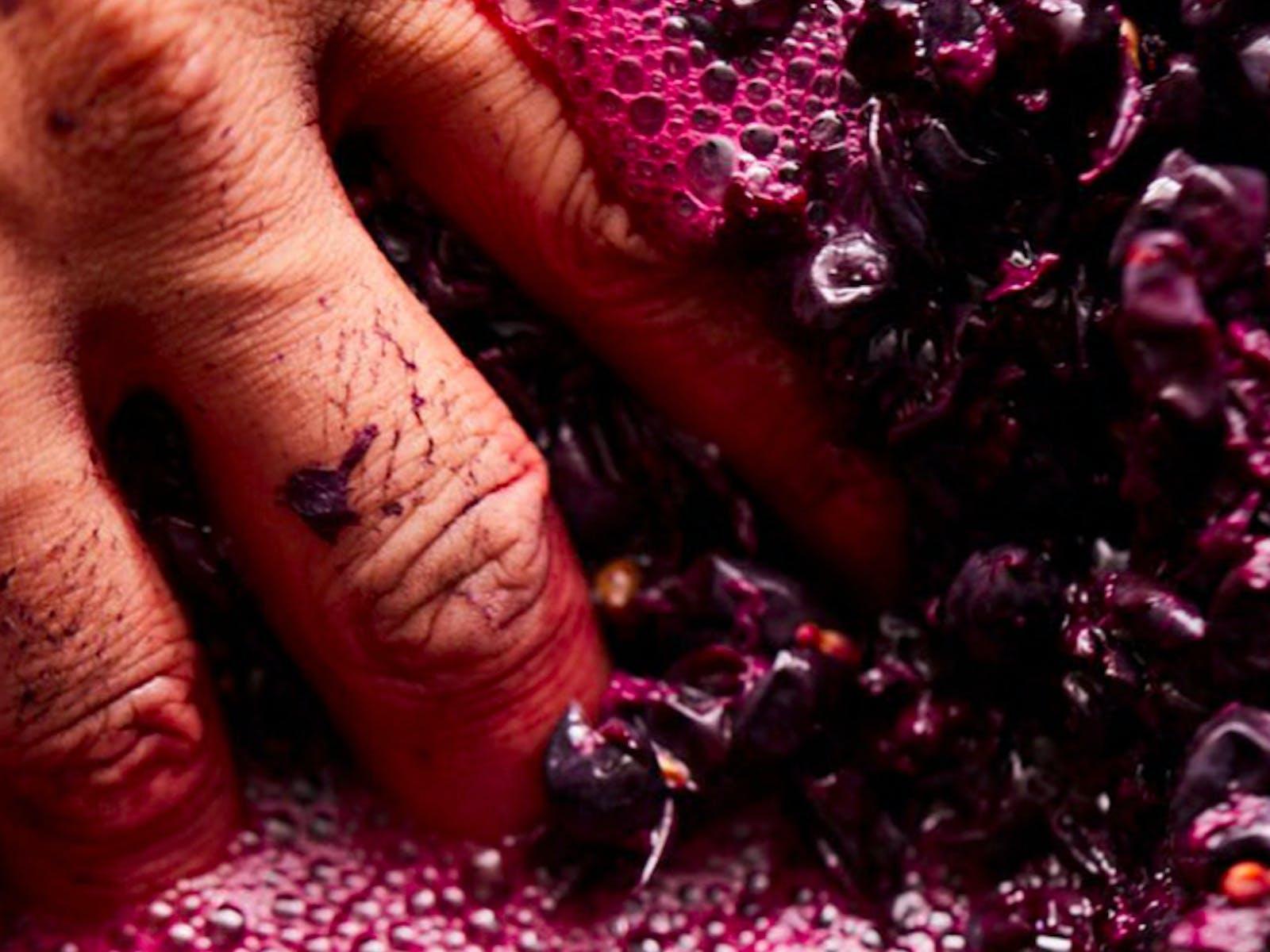 Image for Wired Open Labs: Wine Appreciation - Shiraz Masterclass