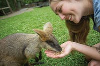 Wallaby feeding at Kuranda Koala Gardens