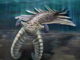 Cambrian Animals: Early complex animals at our doorstep