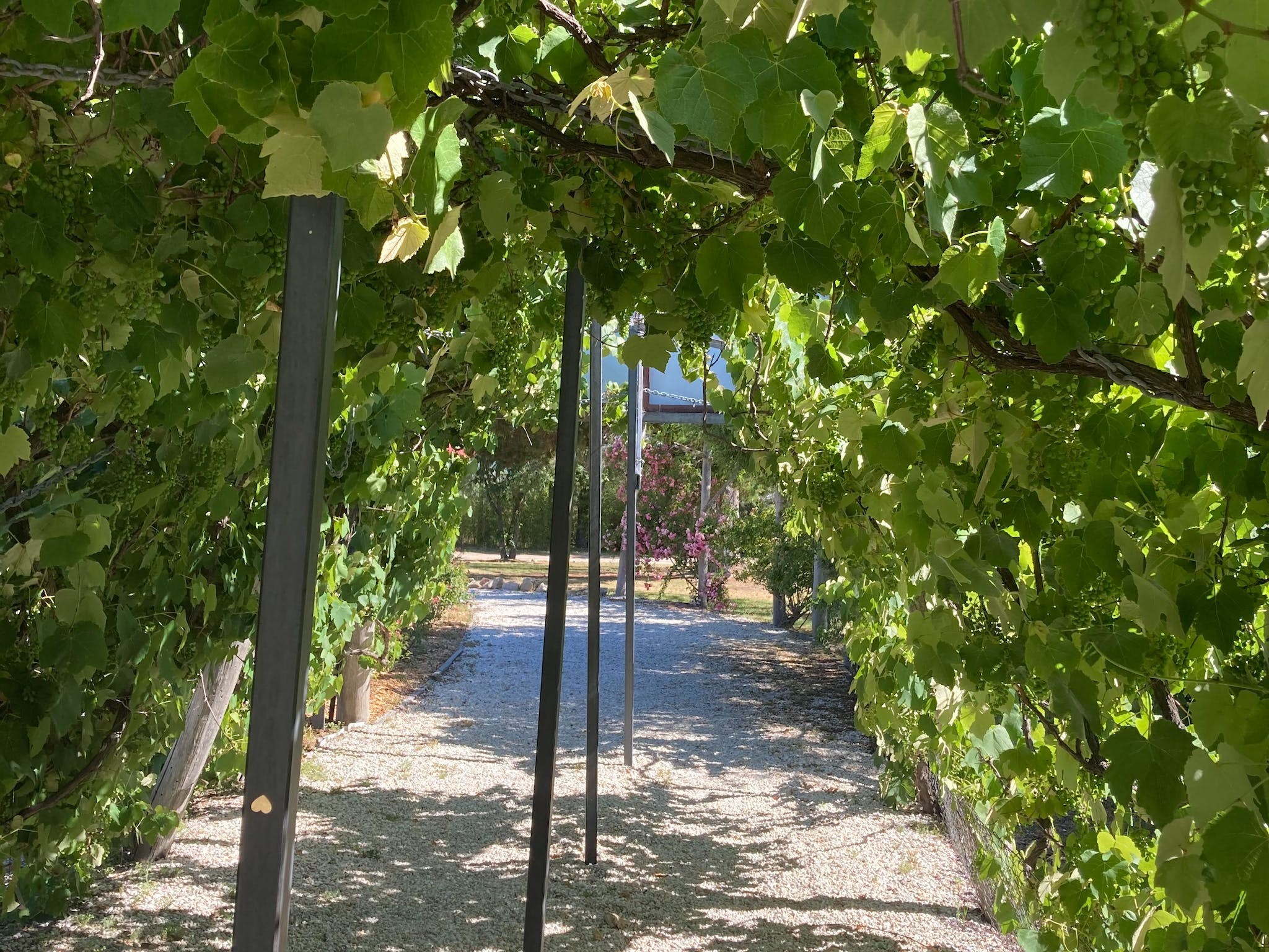 A whimsical feel as you wander through the grape trellis into the tasting area of Summit Estate Win