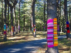 Himalayan cedars wrapped in knitted scarves