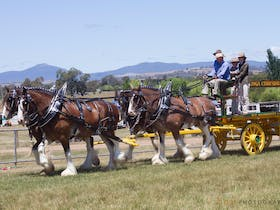 Mansfield Agricultural Show