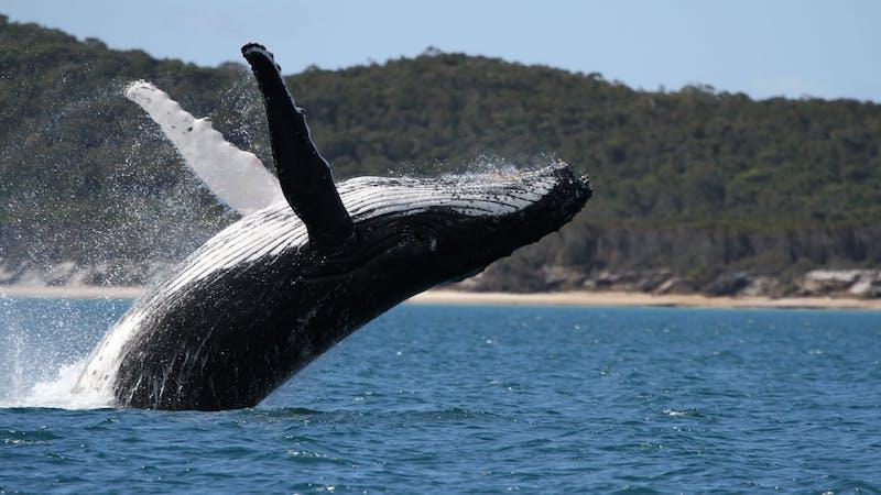 Pacific Whale Foundation Eco Adventures Australia