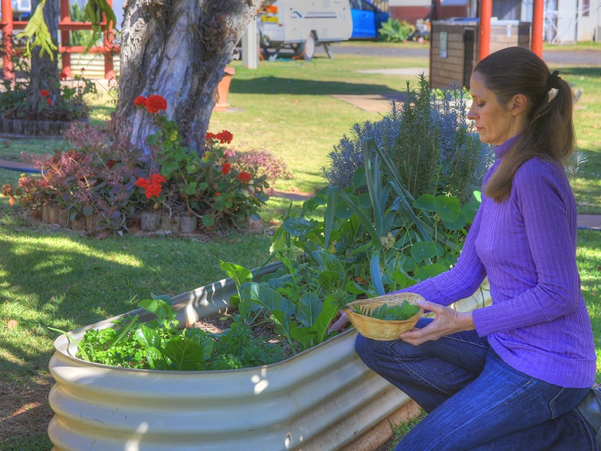 Lady picking fresh herbs from the free herb gardens at BIG4 Toowoomba Garden City Holiday Park