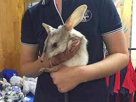 Bilby Experience Charleville