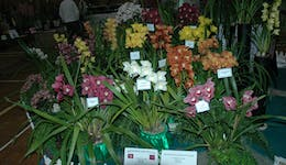 Image of the event 'National Orchid Extravaganza'