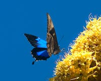Butterfly - They Frequent the Garden