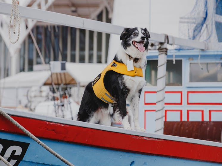 Bailey the dog onboard a boat
