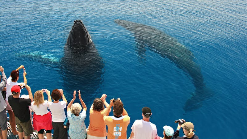 Tasman Venture Whale Watching Hervey Bay