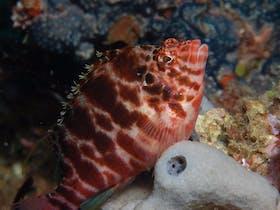 Nursery Reef