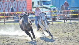 Image of the event 'Gresford  Campdraft and Rodeo'