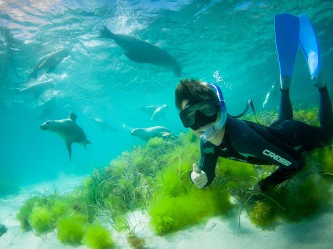 Adventure Bay Charters  Swim with Sea Lions