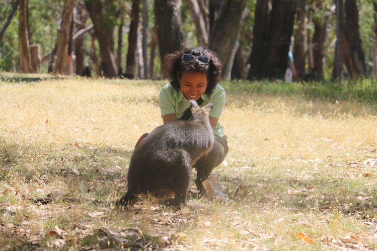 Cleland Wildlife Park Experience including Mount Lofty Summit
