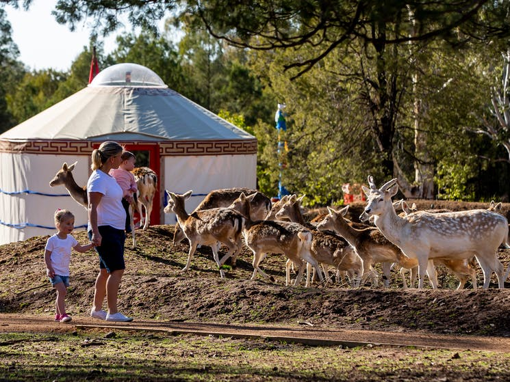 Wild Herds Walkthrough, Taronga Western Plains Zoo, Dubbo