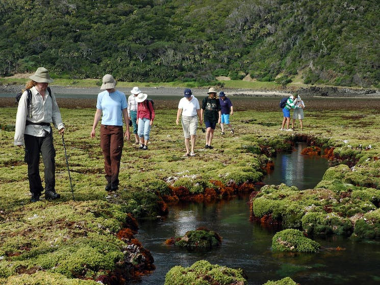 Lord Howe Island Nature Tours