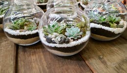 Image of the event 'Terrarium Building Workshop: Bring some lush greenery indoors'