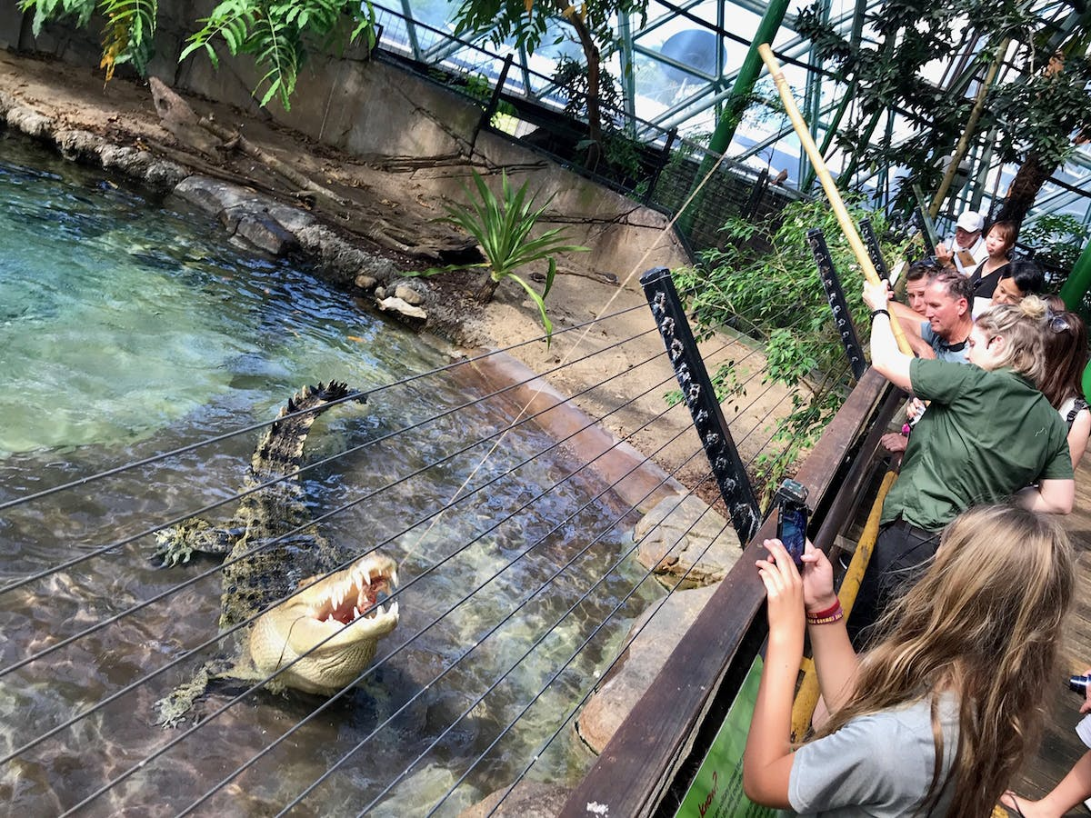 crocodile feeding at Cairns ZOOM and wildlife dome