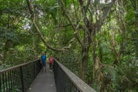Visitors viewing rainforest from elevated walkway on Din Din Barron Falls track.