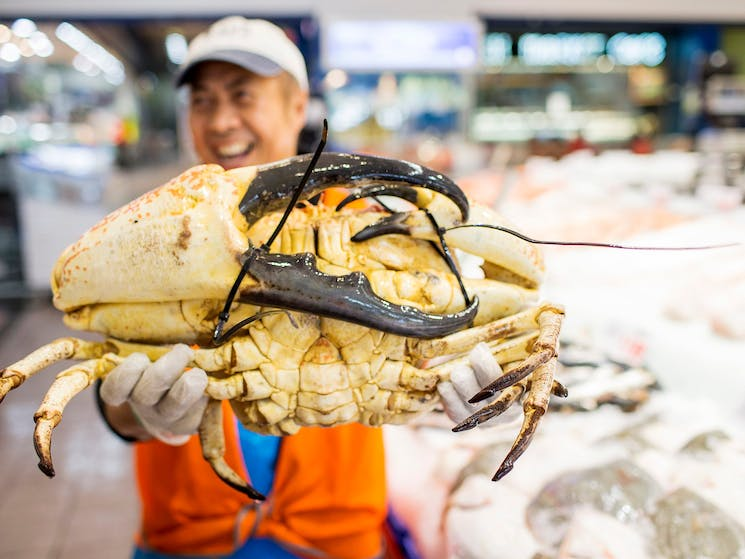 Fishmonger holding a giant King Crab at Sydney Fish Market